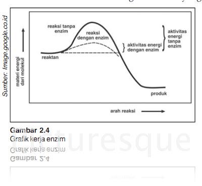 ... enzim dilepaskan enzim bebas untuk membentuk kompleks baru dengan