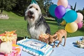 Dog Cake Recipes