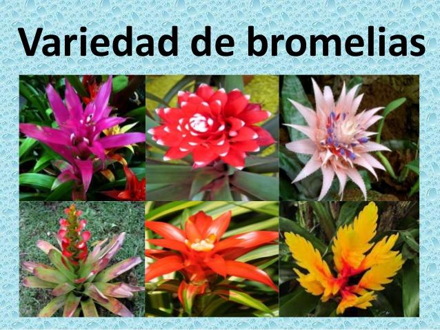 Clases de flores y sus nombres fabulous clases de flores - Clase de flores y sus nombres ...
