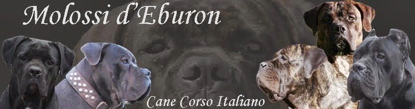 Cane Corso Italiano 'dei Molossi d'Eburon' weblog