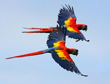 HD WALLPAPER For Pc And Mobile Colour Full Parrot Birds