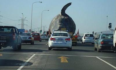 ballena llevada en camion por las calles de sudafrica
