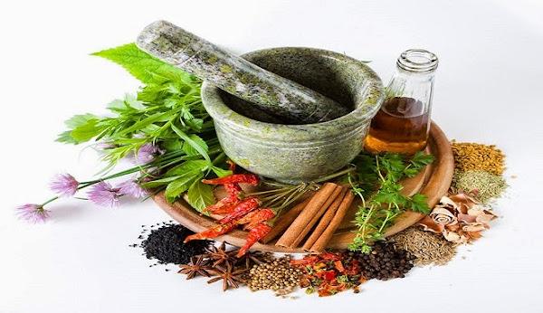 Mengenal Jenis-jenis Tanaman Obat Tradisional