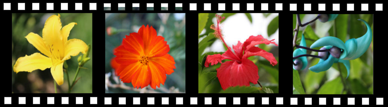 JotaV - Tirinha de filme com fotos