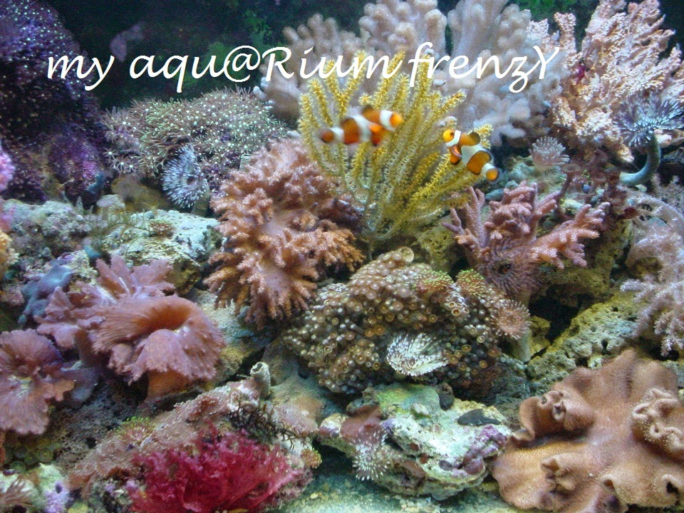my reef GARden frenzY