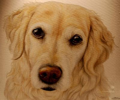 Golden Retriever Pet Portrait Oil on canvas