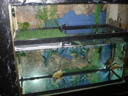 Acuario para tortugas de agua aprender a cuidar animales for Acuario tortugas