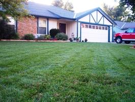 Turf Type Fescue Lawn