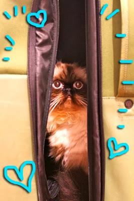 Goma_suitcase_03