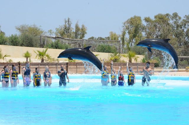 Swimming with Dolphins in Tunisia