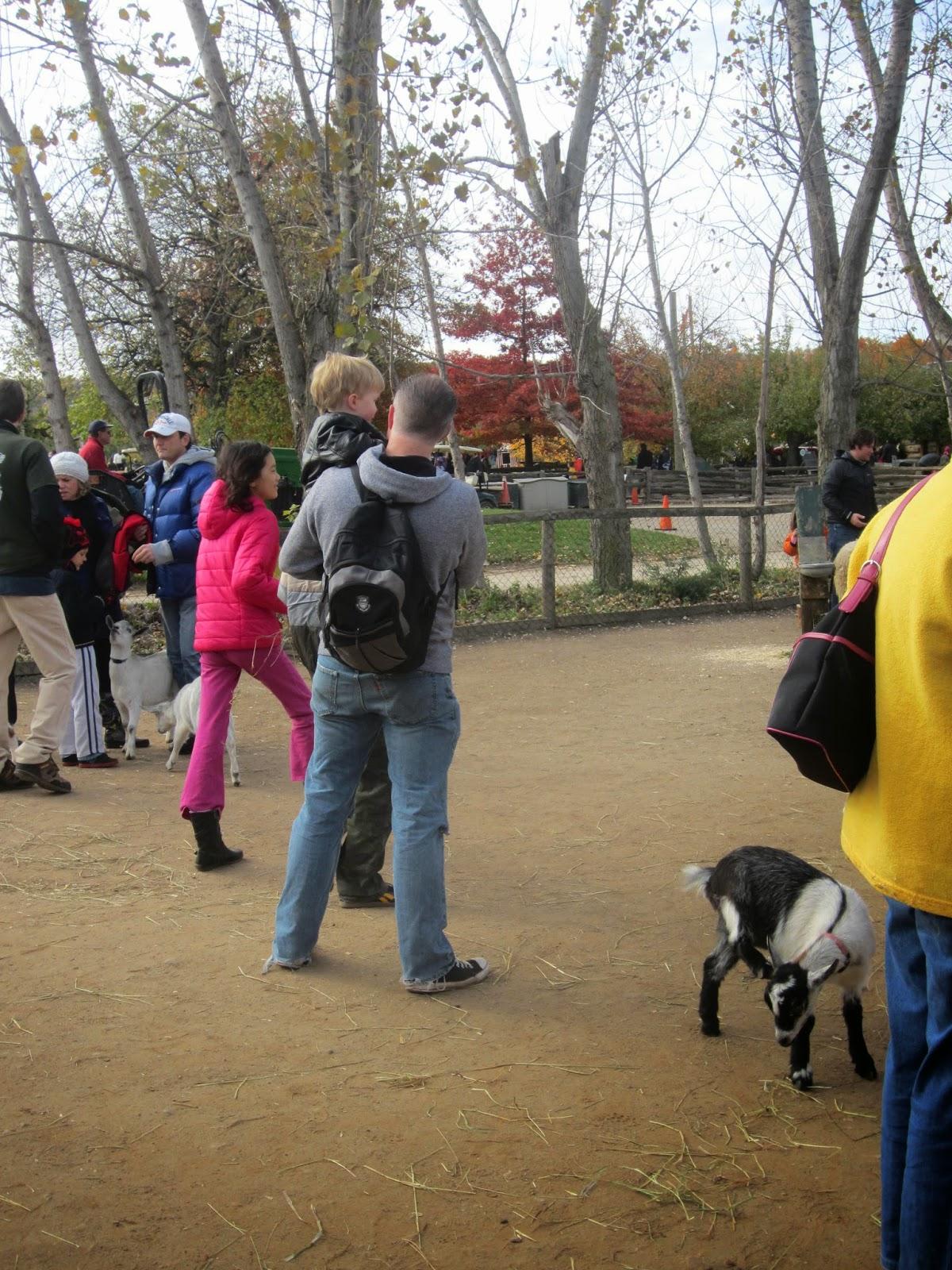 Chudleigh's Farm Petting zoo
