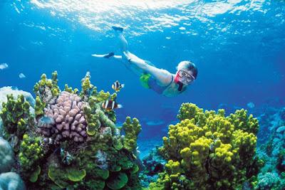 Ini Dia Tips Snorkeling Bagi Anda Yang Tidak Bisa Berenang