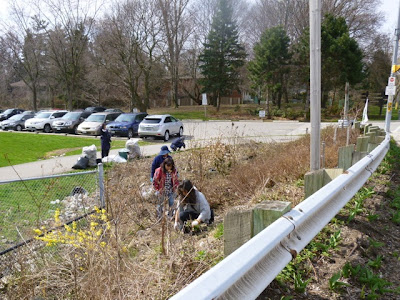 Tzu Chi West Toronto volunteers weed BRG Lakeshore Road West garden bed, Port Credit, ON
