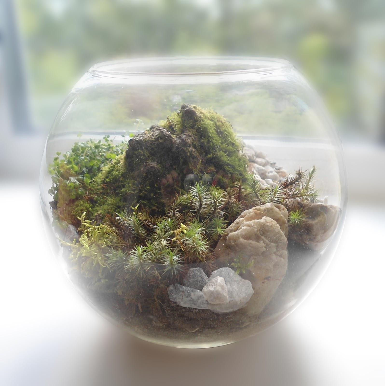 Как вырастить мох в доме 30