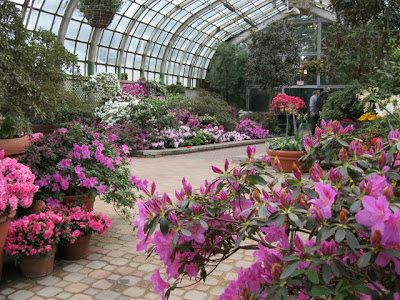 Azaleas spring show Lincoln Park Conservatory