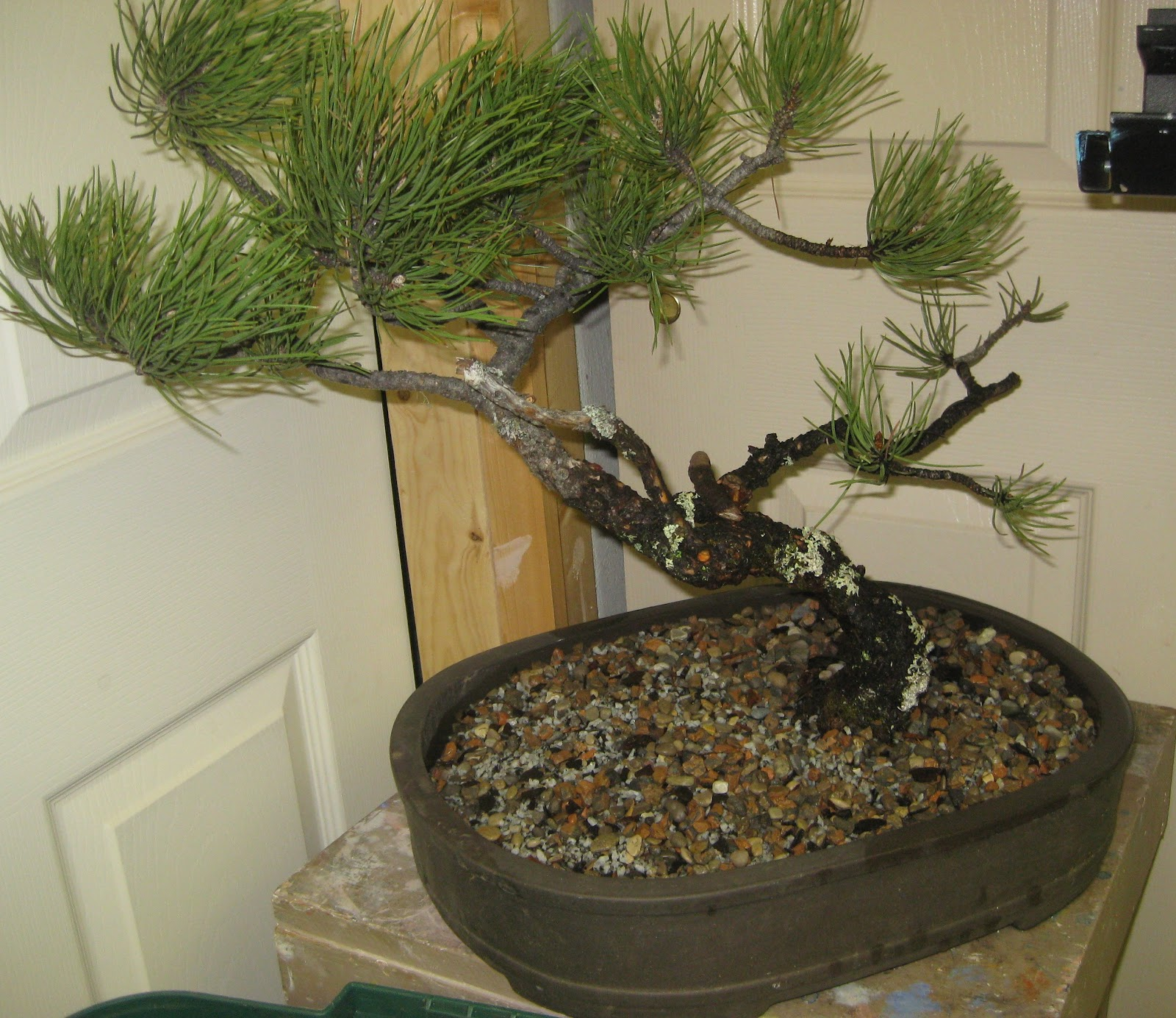 Akron Canton Bonsai Society April 2012