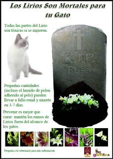 Póster informativo sobre el peligro de los lirios para los gatos