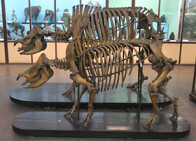 skeleton of a hippo