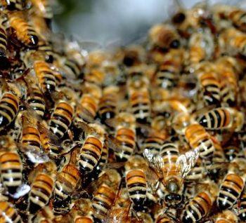 dissertation honey blogspot