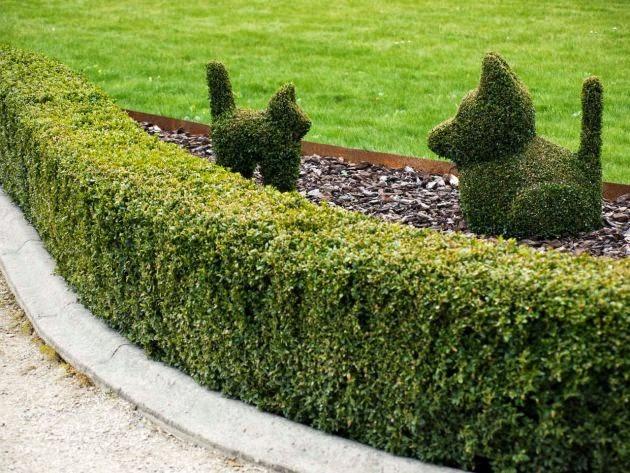 Casas y apartamentos ideas para dise ar un jard n peque o - Arbustos para jardin ...