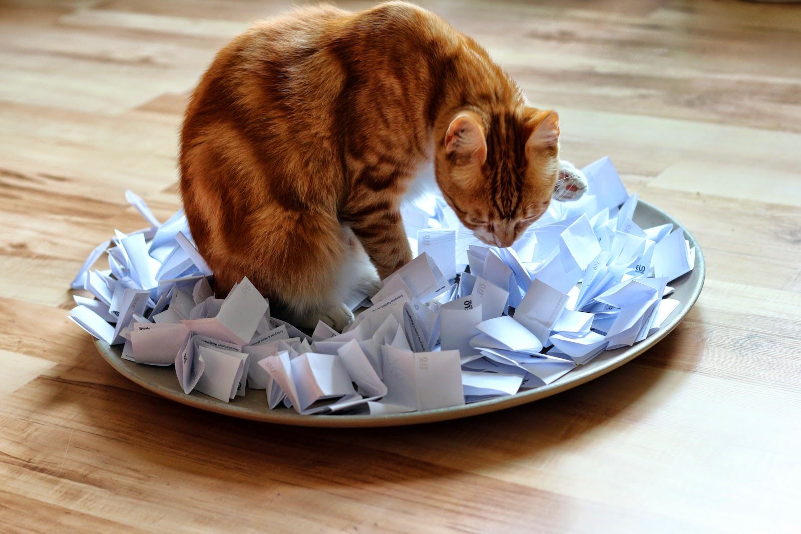 Katzencontent! Paul O'Malley, der rheinhessische Salonlöwe, bei der erneuten Auslosung der/des Thermomix-Gewinner_in | Arthurs Tochter Kocht by Astrid Paul