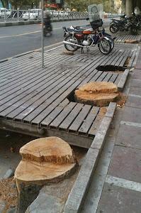 قطع شبانه درختان کهنسال خیابان پهلوی ( ولی عصر)