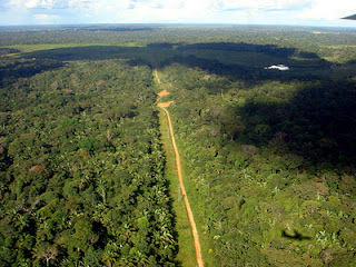 plantar florestas
