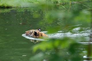 ملف كامل عن اجمل واروع الصور للحيوانات  المفترسة   حيوانات الغابة  146678031_5d6d9b1ba1