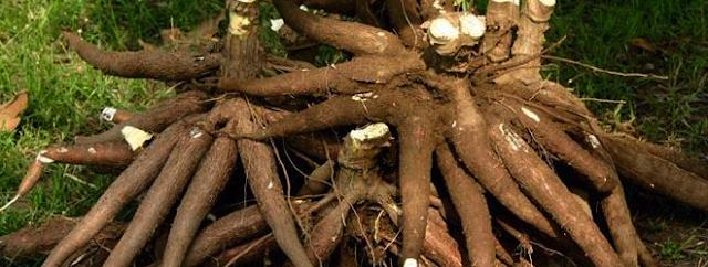 Ide Usaha Dan Peluang Bisnis Sampingan Suplier Makanan Dari Singkong Untuk UKM