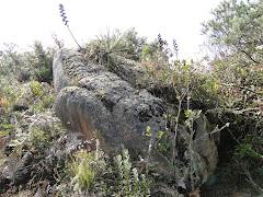 Piedra del sapo