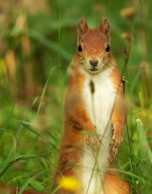 Jagdreform Hessen: Neues Bündnis fordert mehr Tierschutz