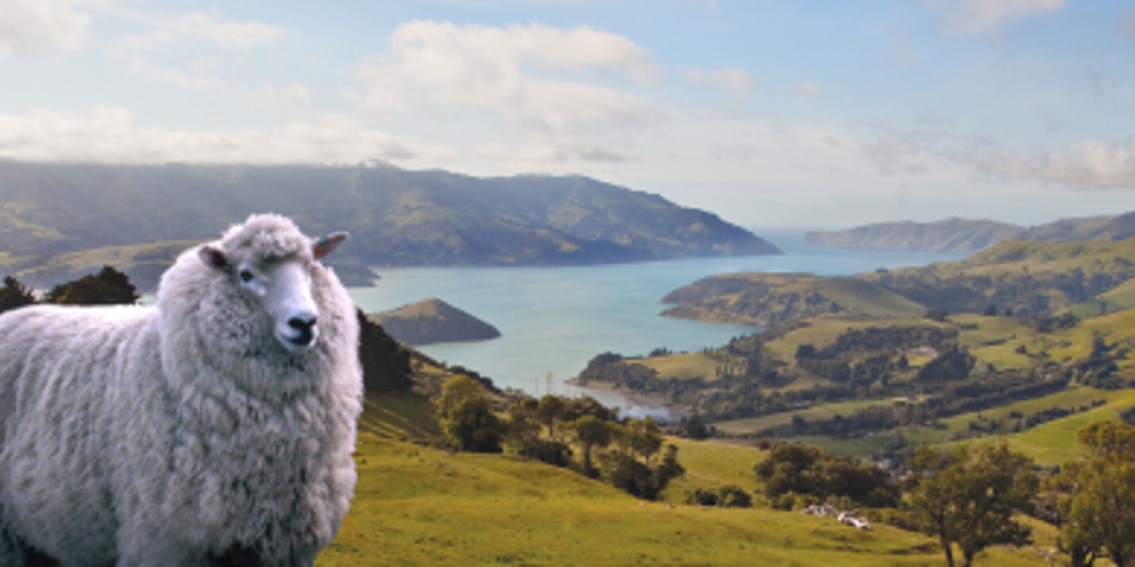 Wool Artist NZ, Taupo, New Zealand, Leanne Clarry : Sheep, Art, Pictures