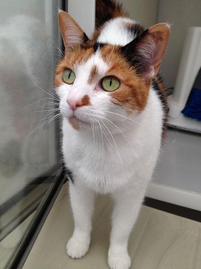Beautiful cat Phoebe