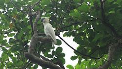 Wild parrot!