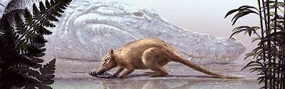 insectivoros en el Eoceno Macrocranion