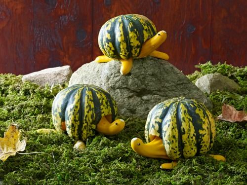Funny animal pumpkin without carving crafts and arts ideas