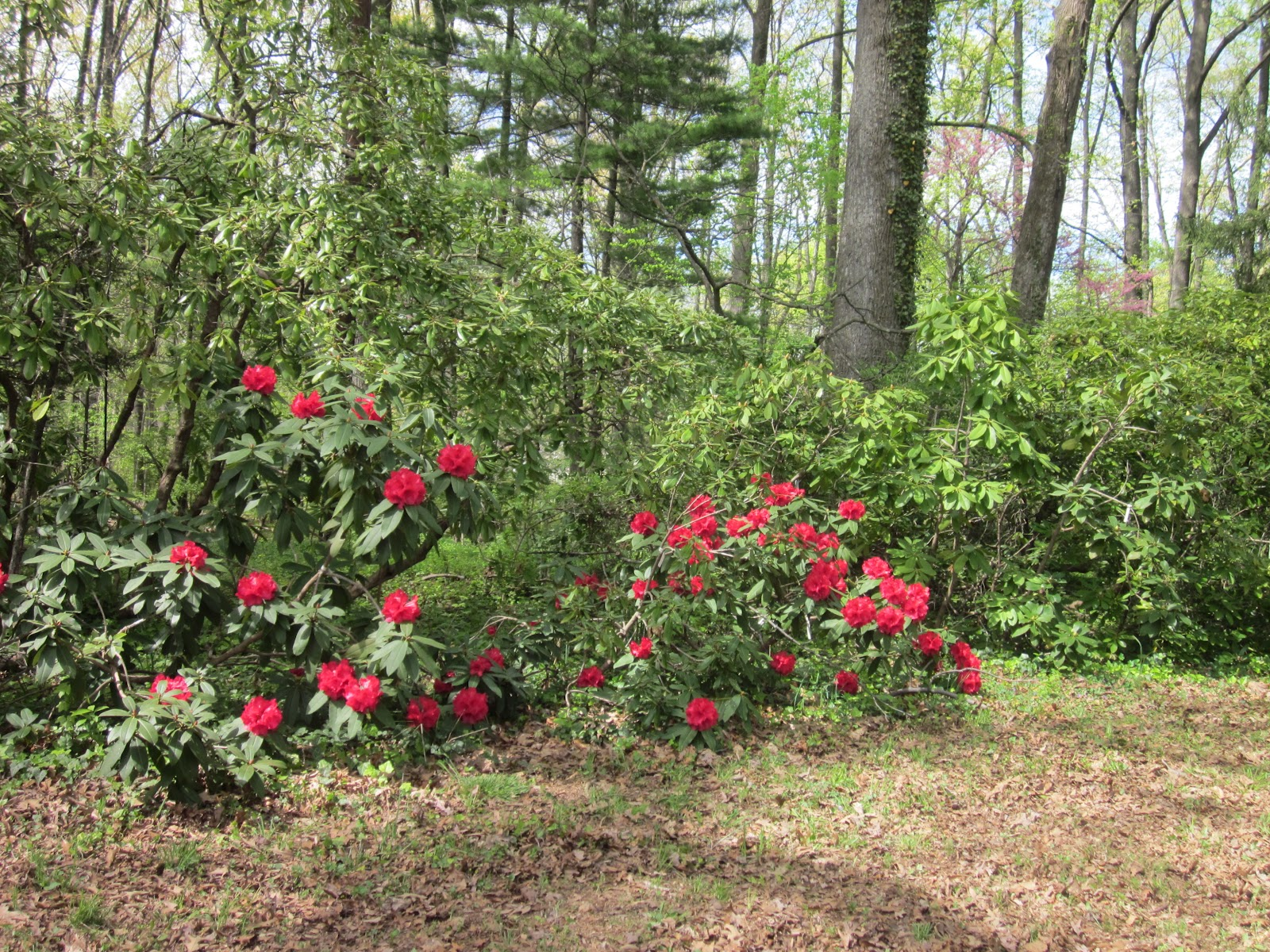 the annandale blog white horticultural park was saved from
