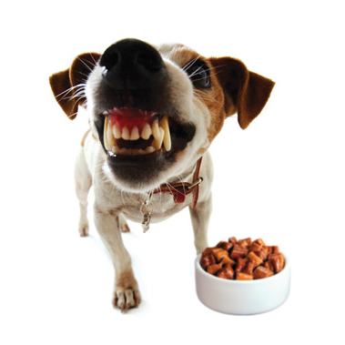 Guarding Food Dog