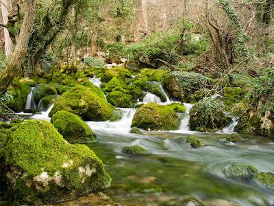 Rio cruza por el bosque y rocas con musgo