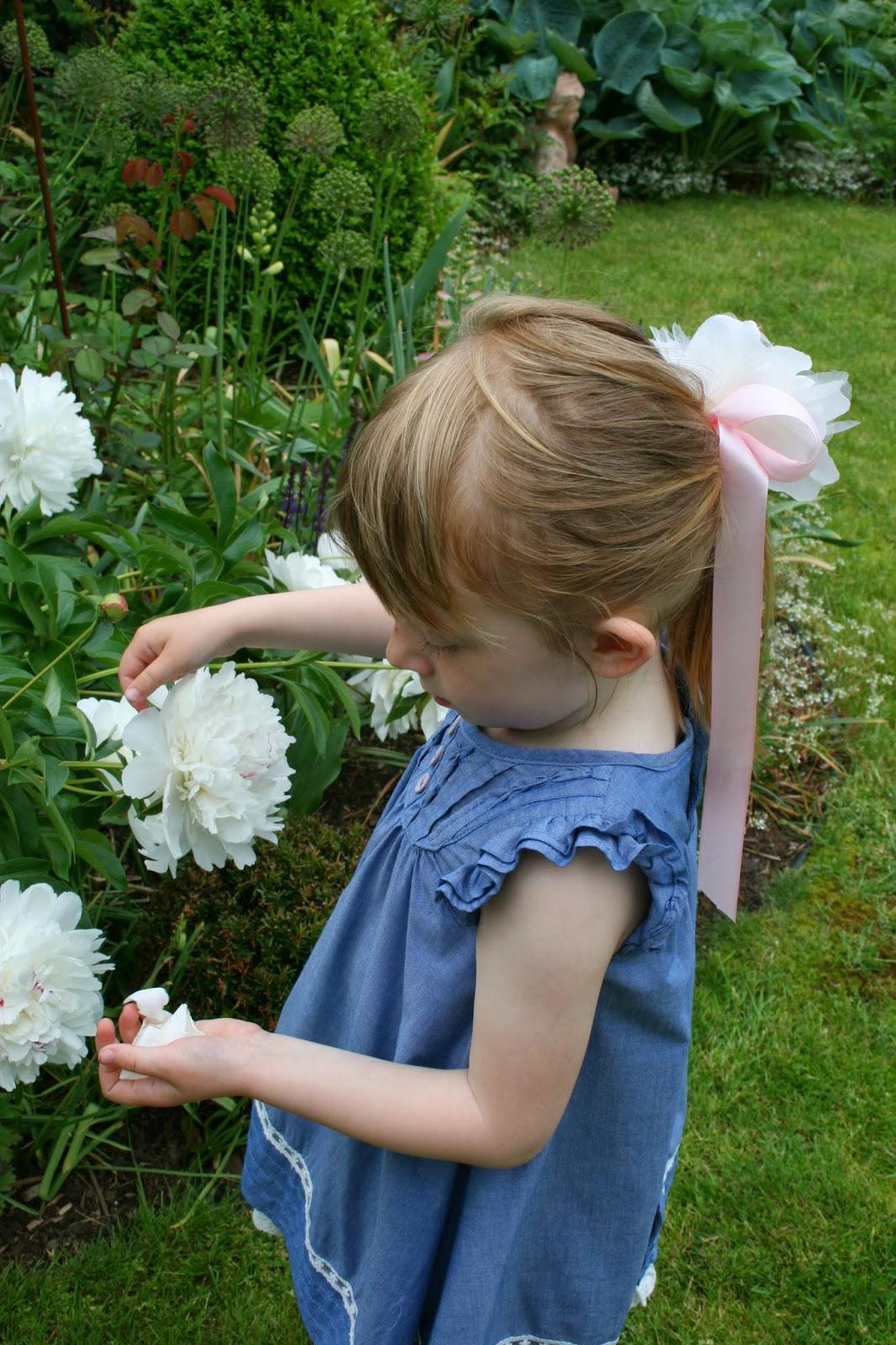 luktoion paeonia lactiflora