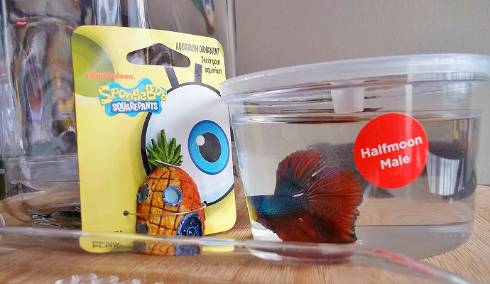 Beta Fish Pet