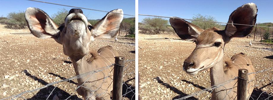 Ynas Reise Blog | Kudu