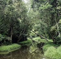 Hutan Lindung Sungai Wein