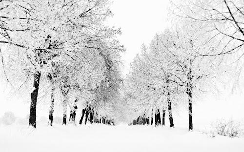 Gambar Musim salju terindah