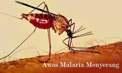 Obat Tradisional Keputihan Malaria Alergi Pengobatan