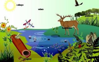 komponen ekosistem dan macam-macam ekosistem
