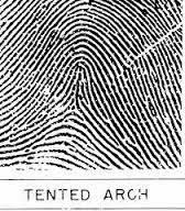 Pola ini bisa terlihat sebagai sebuah Flat Arch atau Tented Arch. Perhatikan setiap pola Arch menaik sangat tinggi.  sc 1 st  RYE_BLOG - Blogspot & RYE_BLOG: Fakta unik