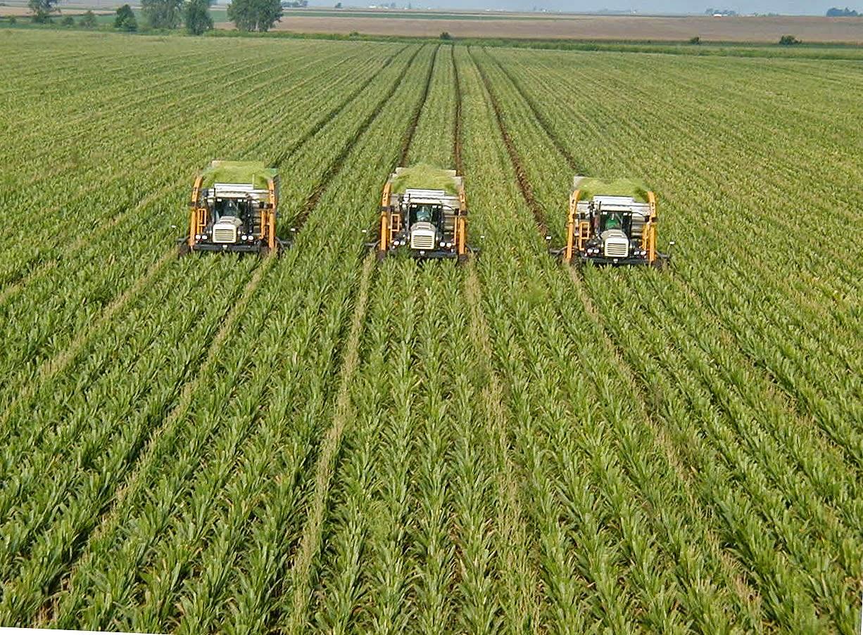 Beberapa Negara Di Dunia Yang Mempunyai Lahan Pertanian Paling Luas