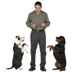 premios y castigos para perros