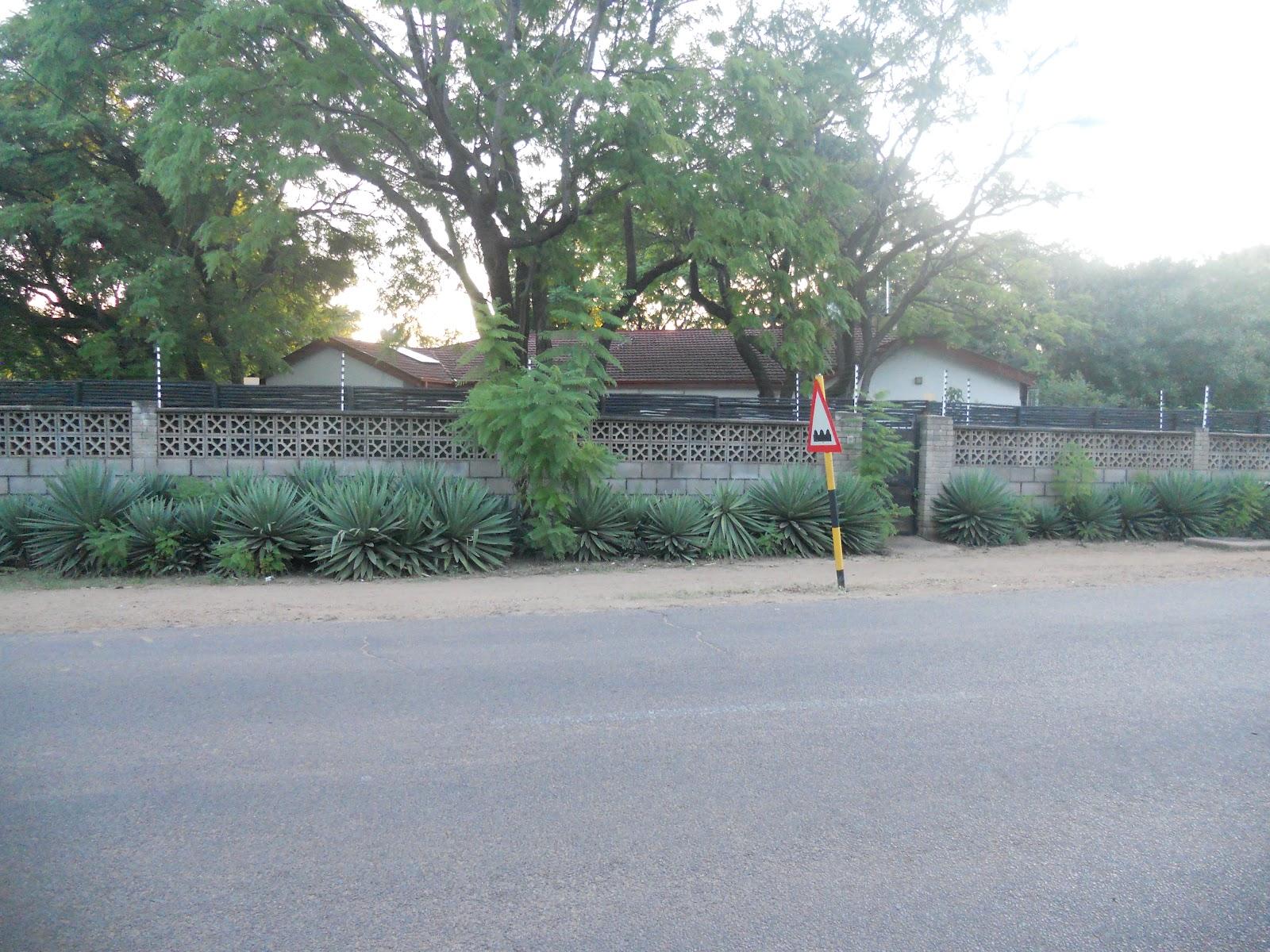 Ullevidsdal: botswana   rapport 4   växter del 1